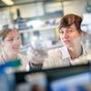 Ursachen von Angst und Depression mittels Optogenetik verstehen
