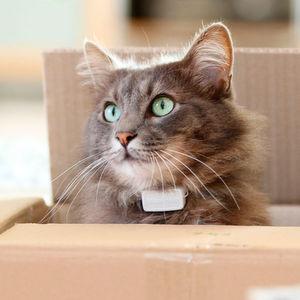 Von der Idee zum Produkt – wie eine Katze eine Erfindung inspirierte