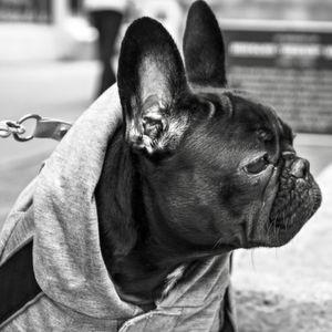 Das Ohr kauft mit – und für Wohlklänge zahlen wir gern