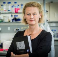 Immunzellen kämpfen gegen Tumore