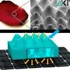 Künstliche Rosenblütenblätter verbessern Effizienz von Solarzellen