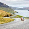 Färöer-Bewohner basteln sich Google Street View – mit Schafen