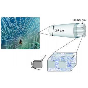 Laser entlockt Spinnenseide strukturelle Geheimnisse