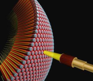 Fliegen verarbeiten Lichtsignale komplexer als bisher angenommen