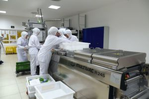 Etikettieren inklusive: Tiefziehverpackung steriler Katheter