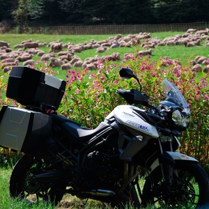 Motorrad-Neuzulassungen August '16: The heat is on