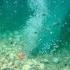 Halten Spiralwirbel und Bakterien klimaschädliches Methan im Meerwasser zurück?