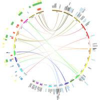 Unsere Gene beeinflussen die Darmflora stärker als angenommen
