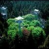 Big-Data-Experimente im Wald