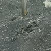 Fische wehren sich gegen Monsterwurm