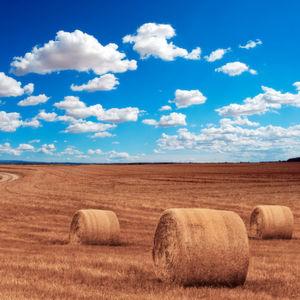 Digitalisierung auf dem Bauernhof