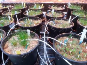Pilze geben Rückschlüsse auf den Klimawandel