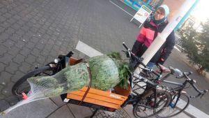 Gerade in der hektischen Vorweihnachtszeit spart der Christbaumtransport per Lastenrad viel Zeit und Nerven – und gesund ist es obendrein.