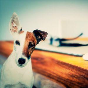 Von Hunden, Katzen, Projektleitern und Chefs