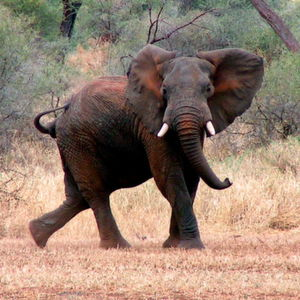 Der Elefanten Tod? Es kommt noch dicker!