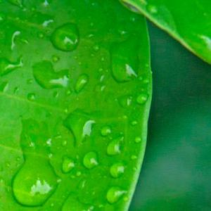 Air Liquide Announces Acquisition of Serdex