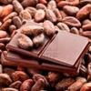 Aromen von Kakaobohnen unter die Lupe genommen