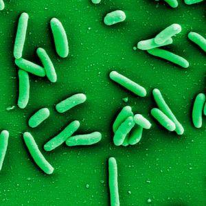 Software entschlüsselt Eigenschaften von Bakterien
