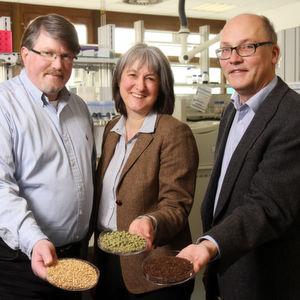 Forscher wollen Braurückstände in Chemie- und Pharma-Rohstoffe verwandeln