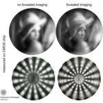 Vergleich zwischen Abbildung ohne 'Foveated Imaging' (links) und mit 'Foveated Imaging' (rechts). Die oberen Abbildungen verwenden das geläufige Testbild 'Lena', die unteren ein Sterntestbild von Siemens.