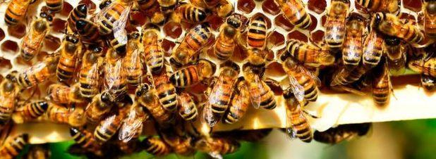 Schmalband-IoT unterstützt Bienenzüchter und Energiedienstleister