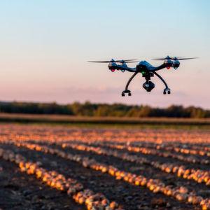 Agricultural Startups: Besser für Esser