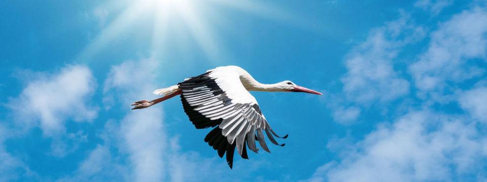 Cloud native - die neue IT bringt nicht der Storch.