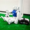 Die Welt durch die Augen eines Roboters