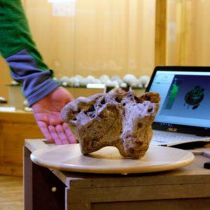 Paläontologische Sammlung mit 3D-Scanner digitalisiert