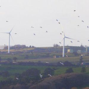 Von Füchsen, Vögeln und Windrädern