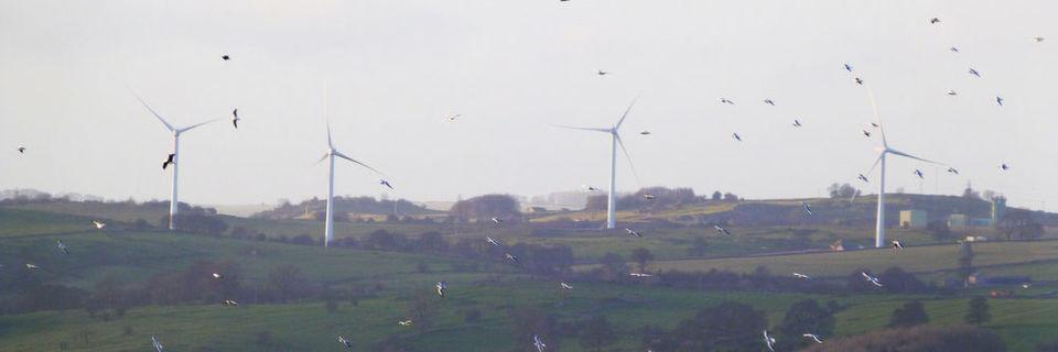"""Eine aktuelle Studie meint herausgefunden zu haben, dass Windräder keine """"Vogelschredder"""" seien, sondern nur """"postfaktisches"""" Gerede der Naturschützer."""