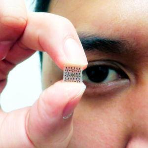 Mit miniaturisierten Lichtmikroskopen ins Innere lebender Zellen blicken