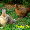 Ostern mit Technik versüßen