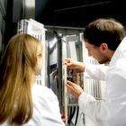 Co-Elektrolyse soll Kohlendioxid zum chemischen Rohstoff machen