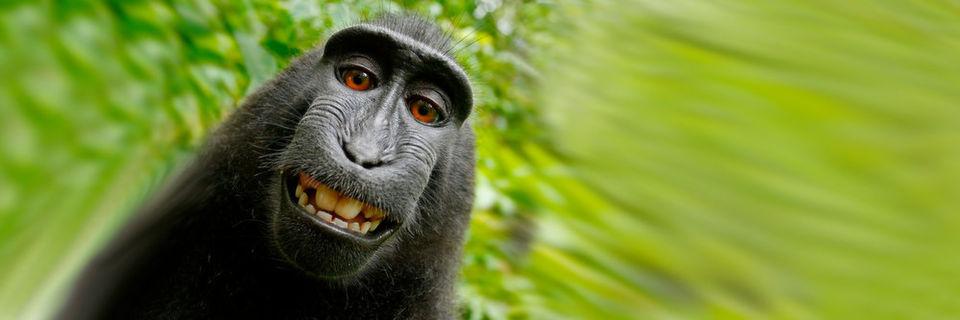 Zahlreiche Gadgets helfen, um das perfekten Selfie zu schießen – wie die fliegende Selfie-Kamera AirSelfie.