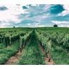 Naturkatastrophen bedrohen Weinregionen