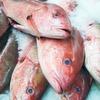 Anstieg von Ciguatera-Fischvergiftungen in Europa