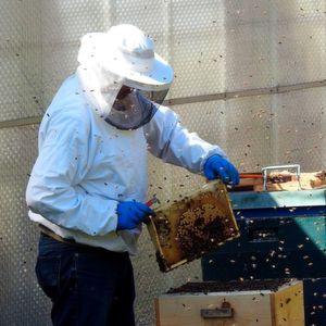 Gut geschützt? Der Sommer ist im Anmarsch, und mit ihm beginnt für viele Allergiker auch die Angst vor Bienenstichen.