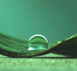 Wassertropfen auf einem Lotusblatt