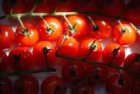 Pflanzenschutzmittel-Rückstände in Obst und Gemüse nachgewiesen