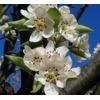 Frühlings-Aktionen der Distributoren und Hersteller
