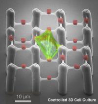 Dritte Dimension in gezielter Zellkultivierung realisiert