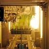 Neue Pflanzenwirkstoffe mit RFID-Unterstützung testen