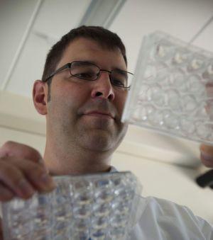 Dr. Steffen Scholpp untersucht mit seiner Arbeitsgruppe u.a. die Neuronenbildung im Thalamus. (Bild: ITG, KIT)