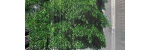 Green RZ – Prognose für 2011 und die Realität