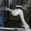 Schlanker Roboter mit großer Reichweite