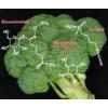 Brokkoli & Co. – Senföle als chemische Keule