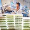 Bayer plant Investition in australisches Zuchtzentrum für Weizen und Raps