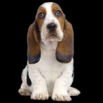 Bei Ihrem Chef bringt der Hundeblick nichts?