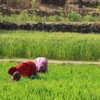 All Quiet on India's Fertilizer Front?